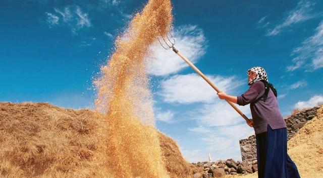Buğday üretimi 2017'de arttı