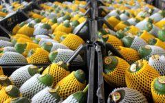 Meksika'da avokado fiyatları patladı